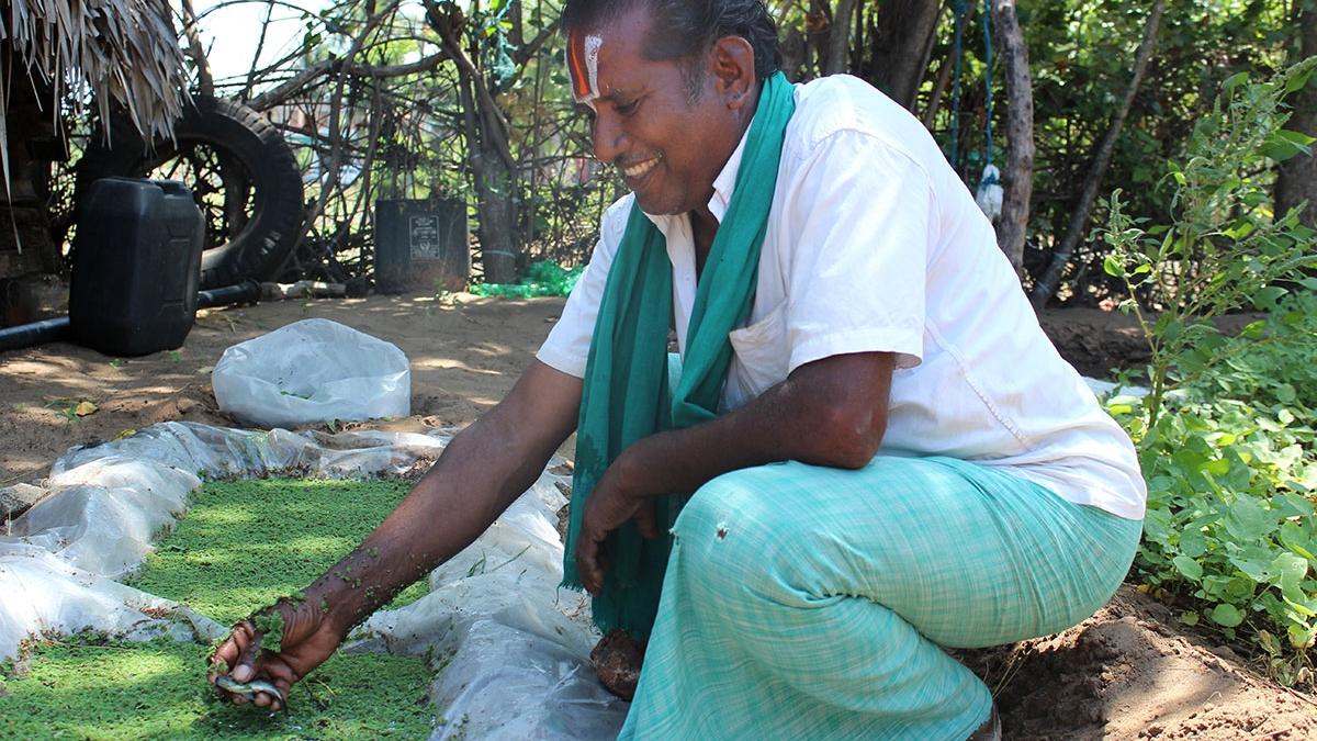 Rajaraman Narayanasamy - Azolla