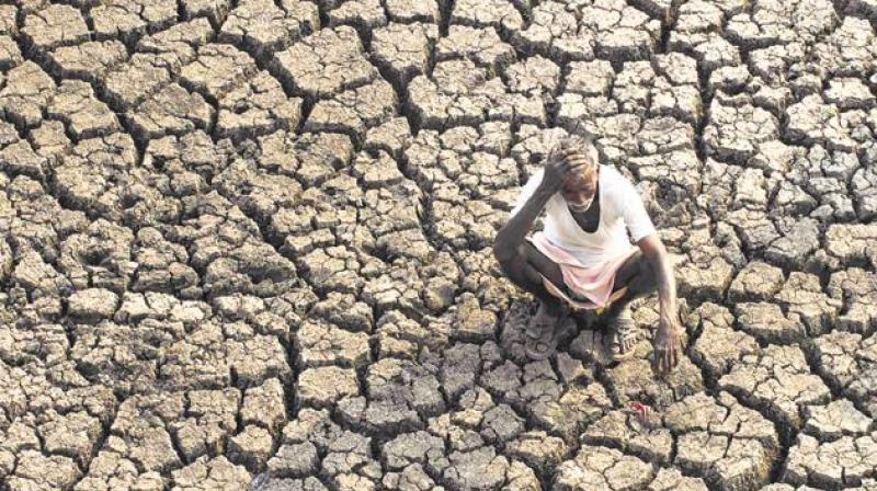 Agricultural Crisis in Tamil Nadu